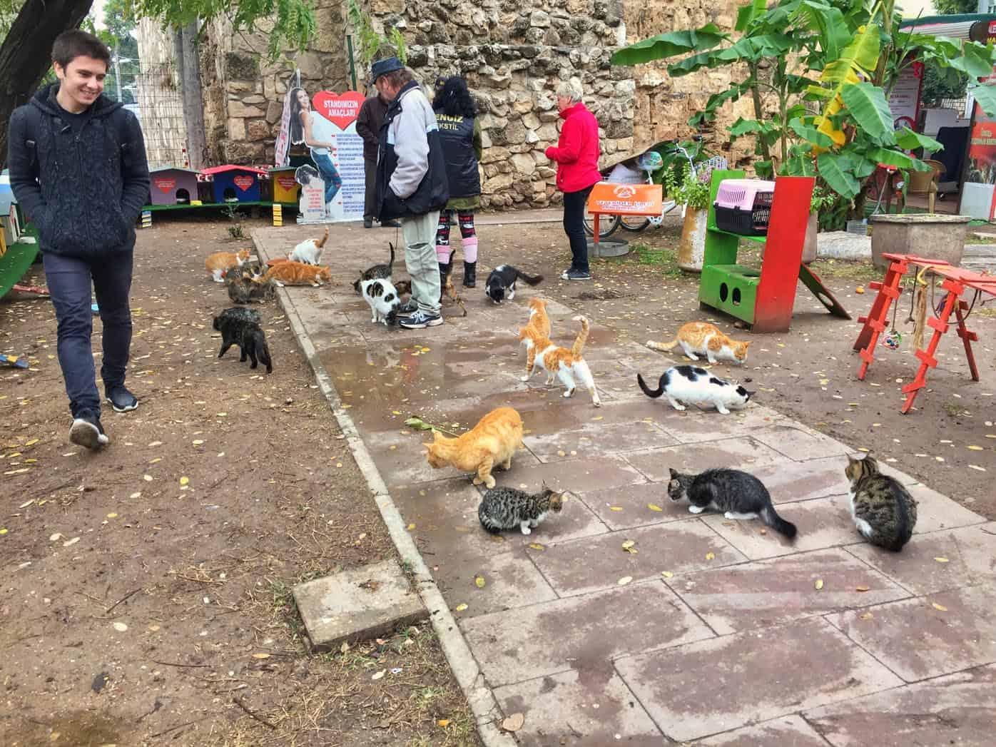 cat shelter in Antalya