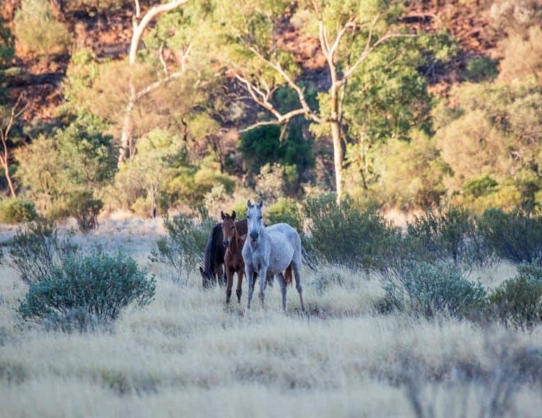 Explore Mereenie Loop Road during outback self drive tour.